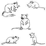 мыши эскиз вручную белизна вала карандаша чертежа предпосылки Стоковые Фотографии RF