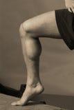мышца икры Стоковая Фотография