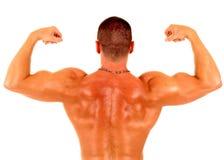 мышца человека Стоковые Фотографии RF