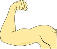мышца Стоковое Изображение RF
