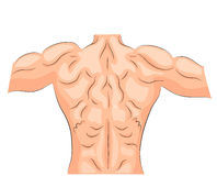 Мышцы задней части культурист иллюстрация вектора