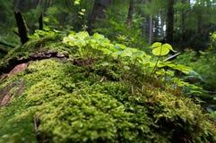 Мышцы на деревьях Стоковое фото RF