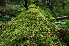 Мышцы на деревьях Стоковые Фотографии RF
