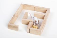 Мышь в лабиринте ища сыр стоковые изображения rf