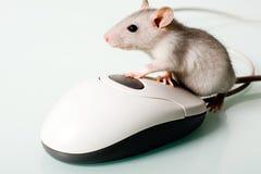 мышь дома Стоковое Фото