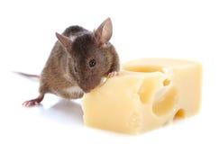 Мышь и сыр Стоковые Фотографии RF