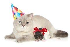 мышь кота Стоковые Фото