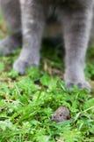 мышь кота Стоковые Изображения
