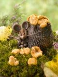 мышь лисичек Стоковые Изображения