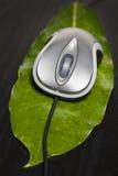 мышь листьев компьютера стоковые изображения rf