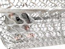Мышь поглощенная в клетке металла Стоковое Изображение RF