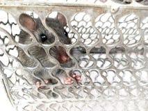 Мышь поглощенная в клетке металла Стоковые Фото