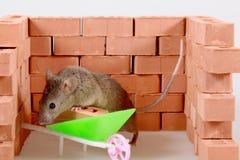 мышь строителя стоковая фотография