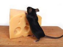мышь сыра стоковые фотографии rf
