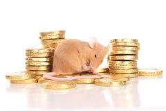 Мышь с золотыми монетками стоковое изображение