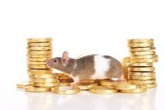 Мышь с золотыми монетками стоковая фотография rf