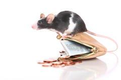 Мышь с малым портмонем и карманными деньгами стоковые изображения rf