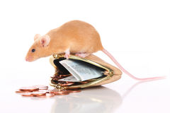 Мышь с малым портмонем и карманными деньгами стоковые изображения