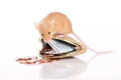 Мышь с малым портмонем и карманными деньгами стоковое изображение rf