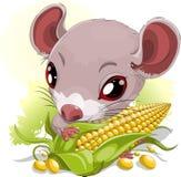 Мышь с мозолью Стоковые Фотографии RF