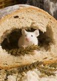 мышь хлебца стоковая фотография
