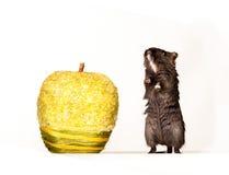 мышь яблока Стоковые Фото