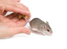 мышь Стоковое фото RF
