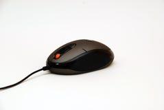 мышь 2 компьютеров Стоковая Фотография RF