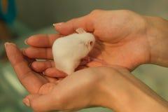 мышь Стоковые Изображения