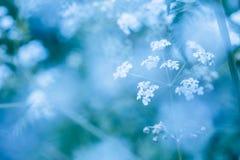 Мягкая голубая предпосылка весны с wildflowers Стоковая Фотография RF