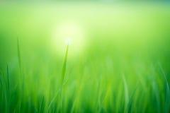 Мягкая естественная зеленая предпосылка Стоковые Изображения