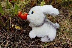 Мягкая игрушка, белый кролик, есть томат растя на ветви стоковые изображения rf