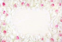 Мягкая картина рамки белых и розовых лепестков пиона цветет Стоковое Изображение