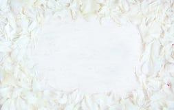 Мягкая картина рамки белых лепестков пиона цветет Стоковая Фотография RF