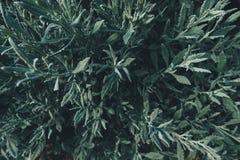 Мягкая растительность Стоковое Фото