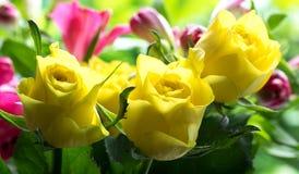 Мягкие желтые розы Стоковая Фотография