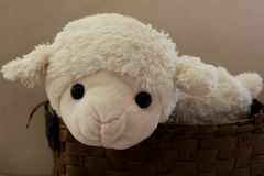 Мягкие игрушки - овечка Стоковая Фотография RF