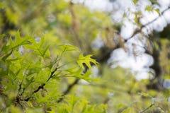 Мягкие листья цвета Стоковое Изображение