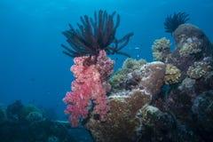 Мягкие красного морские звёзды коралла и пера Стоковое Фото