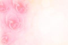Мягкие розовые розы цветут винтажная предпосылка валентинки границы Стоковые Изображения RF