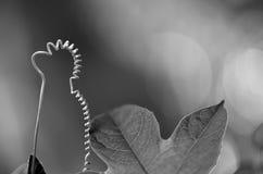 Мягкие хворостины и листья Стоковое фото RF