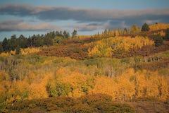 Мягкие цвета падения Стоковое фото RF