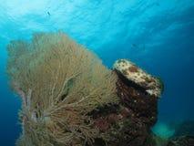 Мягкий коралл Стоковая Фотография