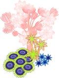 Мягкий коралл Стоковая Фотография RF