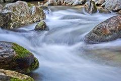 Мягкий поток в лесе Стоковое Изображение RF