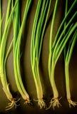 Мягкий свет свежего лука весны на бакборте Вегетарианская еда, Стоковые Фотографии RF