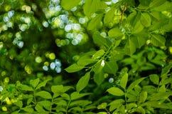 Мягкий свет солнца через листву деревьев в мягком выборочном фокусе против предпосылки расплывчатой листвы и голубого неба r стоковые изображения