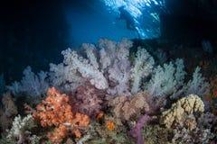 Мягкий свод коралла Стоковые Изображения