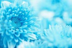Мягкий сладостный голубой цветок для предпосылки влюбленности романтичной мечтательной, fre Стоковое Фото