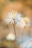 Мягкий фокус, год сбора винограда цветка травы стоковое фото rf